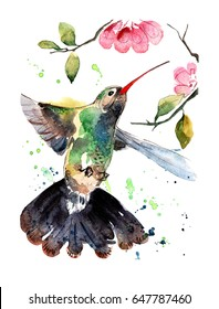 Hummingbird in flight. Hand painted watercolor illustration.