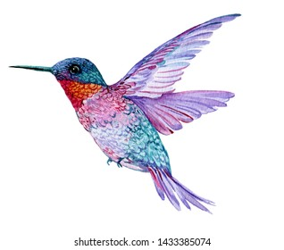 Hummingbird in flight watercolor illustration on isolated white background