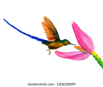 Hummingbird on a flower painted in watercolor isolated on white background