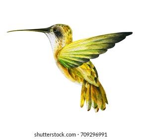 hummingbird painted in watercolor technique