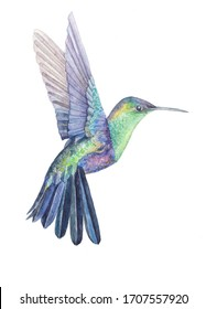 Hummingbird watercolor drawing. Bright multicolor small tropical bird. Hummingbird with bright plumage. Flying bird