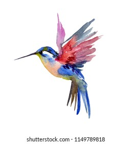 Hummingbird watercolor illustration