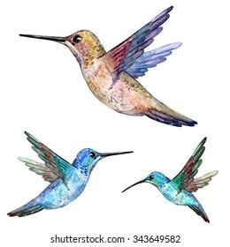hummingbird. watercolor painting