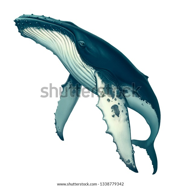 Illustration De Stock De Illustration Realiste De Baleine A Bosse