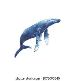 Humpback Whale single element watercolor illustration