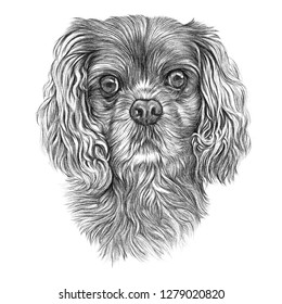 Hunting dog isolated on white background. Hand drawn vintage style sketch of Cocker Spaniel dog. Animal art collection: Dogs. Realistic Illustration of Pet. Design template. Good for t shirt, card