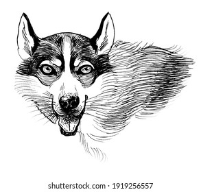 Husky dog head. Ink black and white drawing