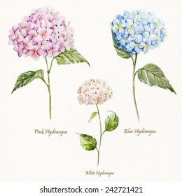 hydrangea, watercolor, flower, set, vintage