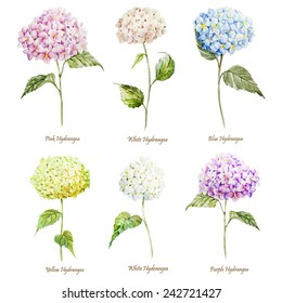hydrangea, watercolor, flowers, set