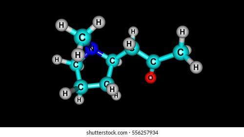 Hygrine is a pyrrolidine alkaloid found in coca. Hygrine usually occurs along with other, more potent alkaloids such as atropine or cocaine. 3d illustration