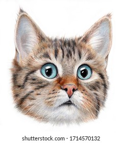 Hyper-realistic portrait of a cat with blye eyes. Isolated on a white background.