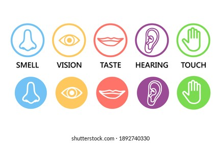 Icon set of five human senses: vision (eye), smell (nose), hearing (ear), touch (hand), taste (mouth ). Simple line icons and color circles, raster illustration.