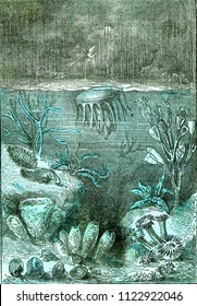 Ideal view of the land and the seas at the beginning of the Silurian period