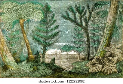 Ideal view of a marsh and a forest of the coal period, vintage engraved illustration. From Natural Creation and Living Beings.
