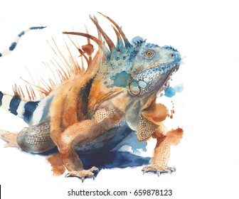 Iguana green iguana lizard big reptile wild animal watercolor painting illustration isolated on white background
