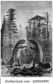 Iguanodon and Megalosaurus in a forest of ferns, cycads and conifers, vintage engraved illustration. Earth before man  1886.