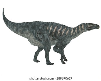 Iguanodon Side Profile - Iguanodon was a herbivorous dinosaur that lived in Europe during the Cretaceous Period.