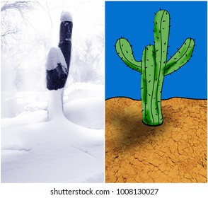 Iimage of the cut down tree in the winter in a snow and a cactus of the similar form in desert