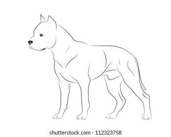 Illustrated Pit Bull