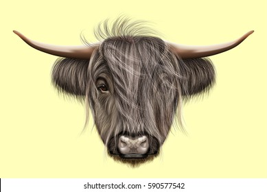 Illustrated portrait of Highland cattle. Cute head of Scottish cattle on yellow background.