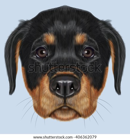 Illustrated Portrait Rottweiler Puppy Cute Face Stock Illustration