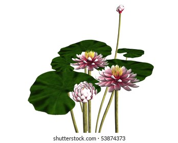 Illustration of a 3D blooming waterlily