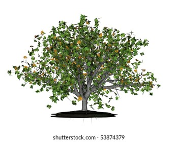 Illustration of a 3D oak, isolated