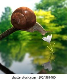 Illustration 3D - Snail Smelling a Flower