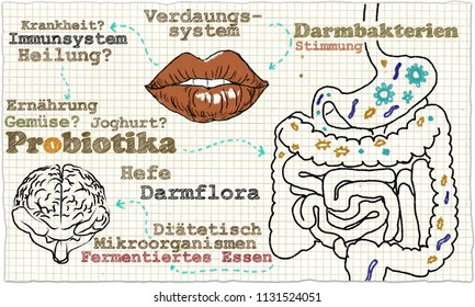 Illustration about Probiotics and Gut Bacteria in cycle