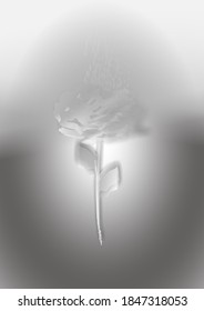 Illustration of an abstract silvery rose, on a shiny background, useful for greeting or invitation cards.