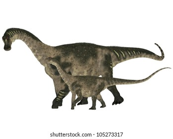 Illustration of an adult and a young Antarctosaurus (dinosaur species) isolated on a white background