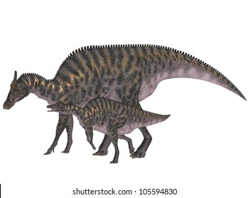 Illustration of an adult and a young Saurolophus (dinosaur species) isolated on a white background