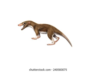 Illustration of an Ancient mammal Megazostrodon