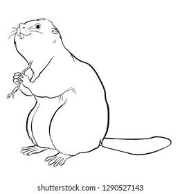 Illustration of a Animal - Beaver, Otter Line Art
