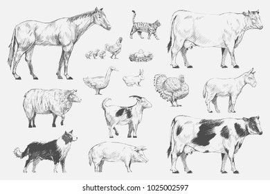 Illustration of animals