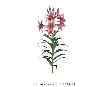 Illustration of an asiatic lily (raytraced image)