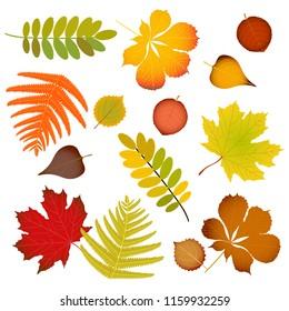 illustration of autumn leaves set, isolated on white background. simple cartoon flat style,