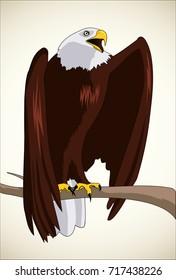 Illustration of bald eagle