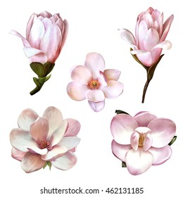 Illustration of Beautiful blue, pink flowers, set of spring flowers: magnolia flowers in different views isolated on white background