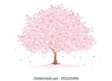 Illustration of beautiful cherry blossoms in full bloom