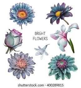 Illustration of Beautiful purple, pink and blue flowers, set of spring flowers: iris blossom, rose camellia and bell flower, dahlia bloom isolated on white background