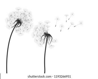 illustration of black dandelion  silhouettes on white background
