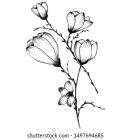 Illustration of blooming magnolia, in graphic. Elegant design, isolated on a white background. Hand drawn sketch of flowers on a branch of a magnolia tree. For design -invitations, greeting card.