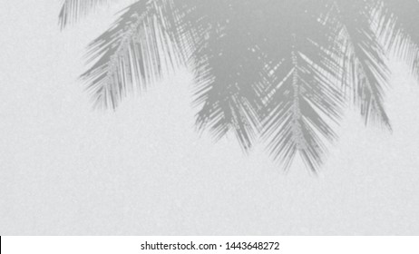 illustration of Blur shadow of coconut palm tree on white wall with motion blur effect