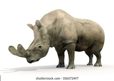 An illustration of Brontotherium on a white background. Brontotherium is an extinct group of large herbivores. It was endemic to North America during the Late Eocene epoch.