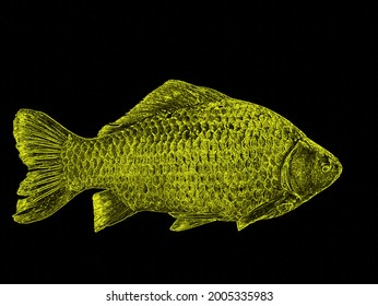 Illustration of a carp fish flashing in yellow on a black background. Crucian carp is a freshwater fish. Fisherman's catch. Yellow glow in the dark. Fisherman's trophy. Beauty. Background picture.