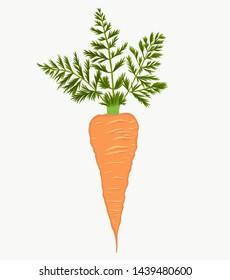 illustration carrot on the crean white backgrond