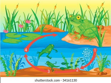 Illustration of  a cartoon frog on white (vector available in portfolio)