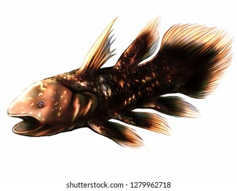 Illustration of coelacanth in color version