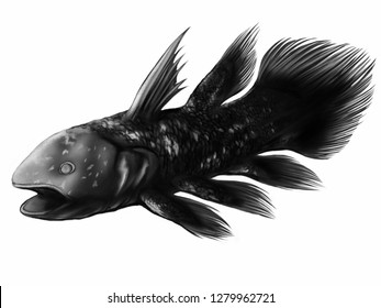Illustration of coelacanth in monochrome version